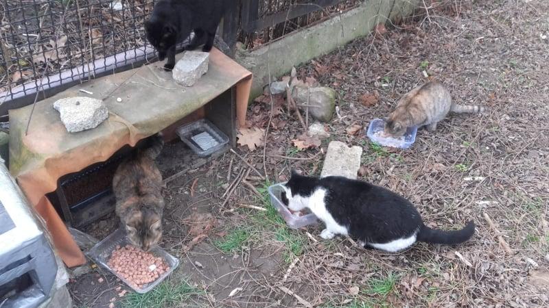 wolno żyjące koty wodzislaw slaski